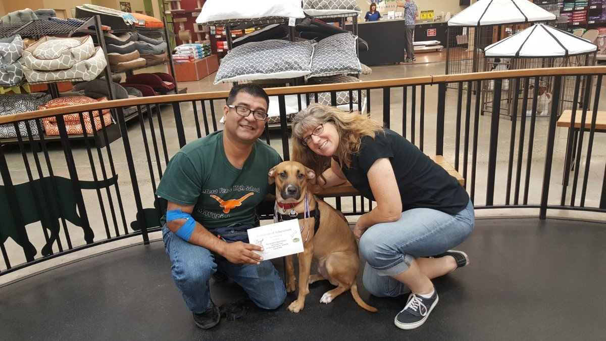 Happi Dawgs - dog training classes, puppy training classes, private lessons, best dog training near you serving Roseville CA and Sacramento CA areas.
